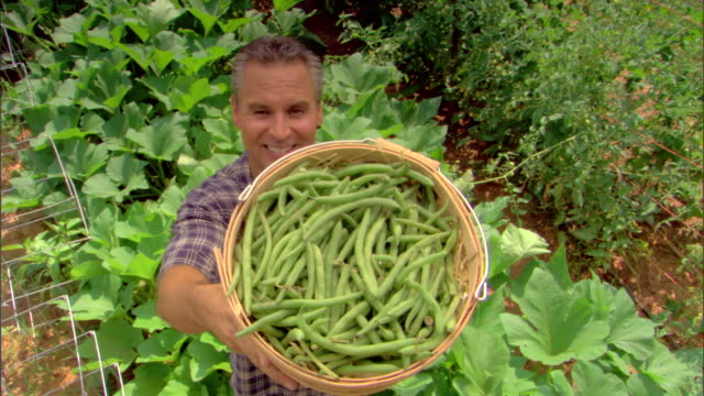 High angle view of man with basket of string beans