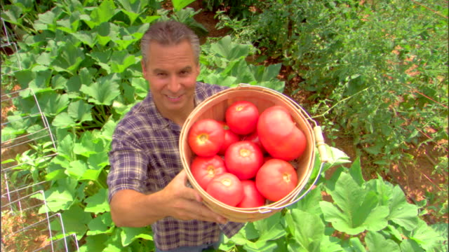 high angle view of man with basket of tomatoes - see other clips from this shoot 1425 stock videos and b-roll footage
