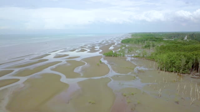 high angle  view of mangrove forest - malaysia stock videos & royalty-free footage