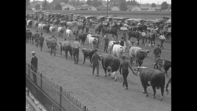 high angle view of marching band parading on track of iowa state fairgrounds, parked cars by fence, tent and houses in bg / rows of parading cattle... - bestiame video stock e b–roll