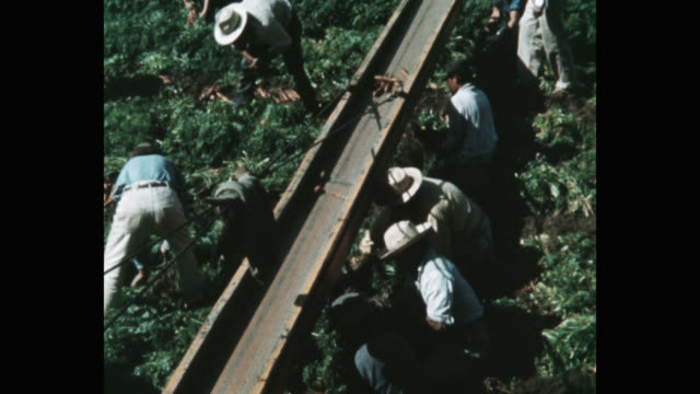 high angle view of people harvesting carrots in field - lavoratore emigrante video stock e b–roll