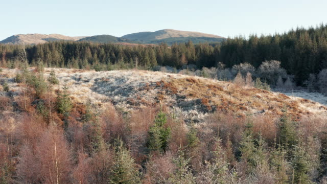 high angle view of remote area of rural dumfries and galloway with pine forest and frost on the ground - johnfscott stock videos & royalty-free footage