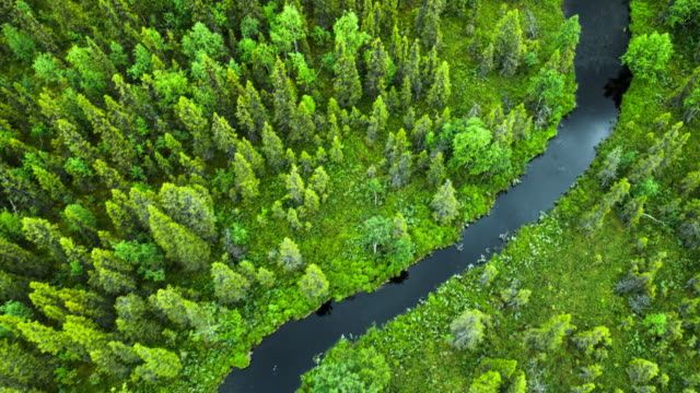 high angle view of river im wald-lappland, schweden - nadelbaum stock-videos und b-roll-filmmaterial