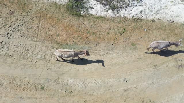 ジェリココアラ、セアラ、ブラジルの砂丘の高角度ビュー - いくつかのロバが移動 - アジア野ロバ点の映像素材/bロール
