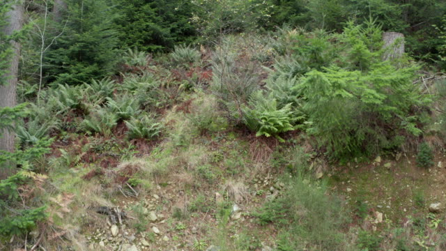 high angle view of  scottish pine woodland with plants starting to displaying autumn colour - johnfscott stock videos & royalty-free footage