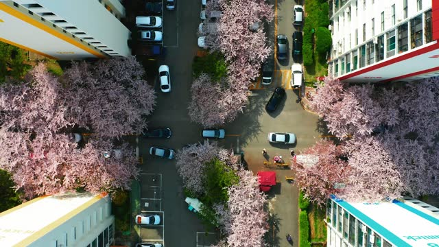 vidéos et rushes de high angle view of spring townscape with cherry blossom trees - town