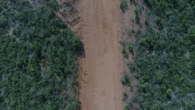 high angle view of the landscape of cerrado in tocantins, brazil - tocantins stock videos and b-roll footage