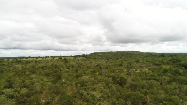 high angle view of the landscape of cerrado, tocantins, brazil - tocantins stock videos and b-roll footage
