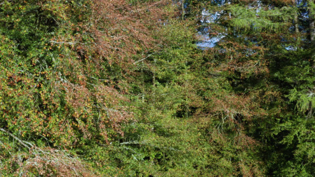 high angle view of trees showing autumn colour - johnfscott stock videos & royalty-free footage