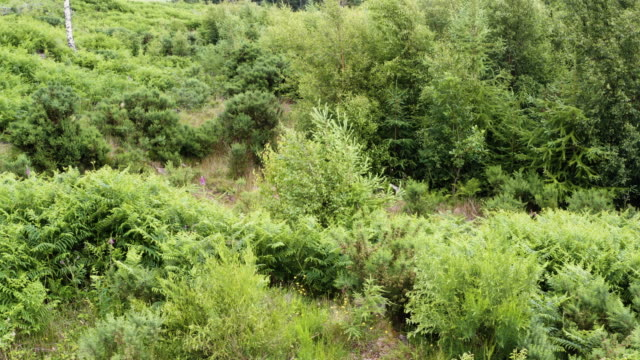 high angle view of young fir trees in an area of forest in south west scotland - galloway scotland stock videos & royalty-free footage