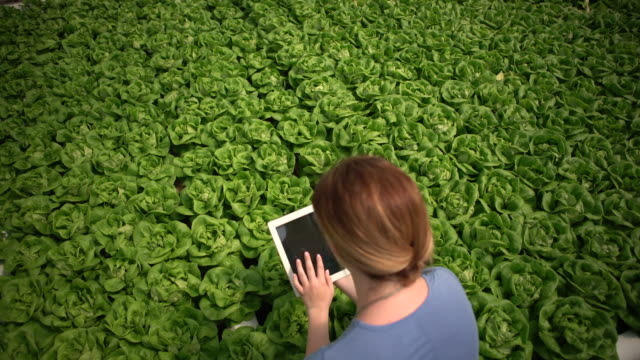 high angle view of young woman with a digital tablet studying plants - crop plant stock videos & royalty-free footage