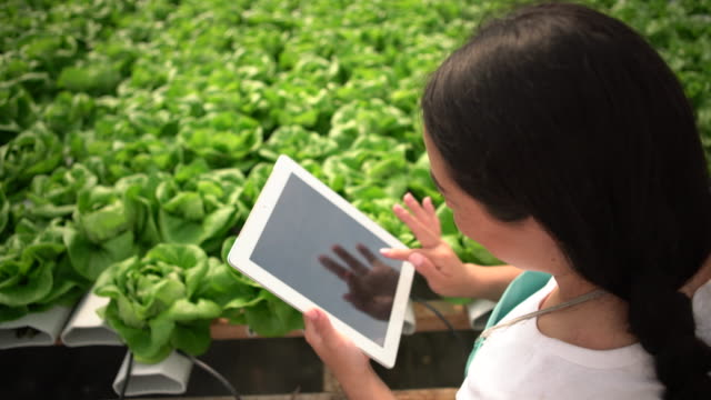 vídeos y material grabado en eventos de stock de high angle view of young woman working on a digital tablet in a hydroponic farm - acceso
