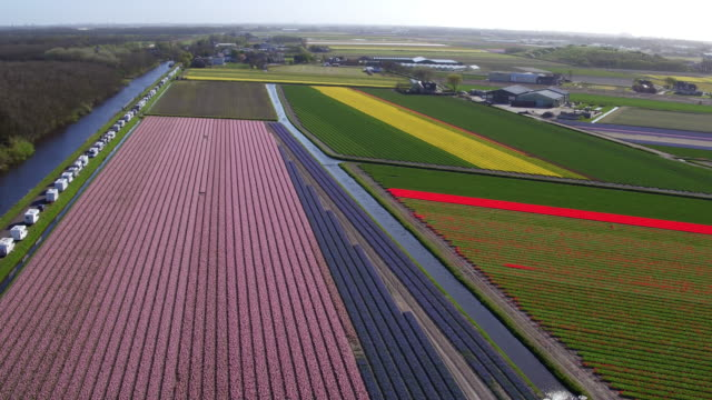high angle view on tulips in flower field - holland stock videos and b-roll footage