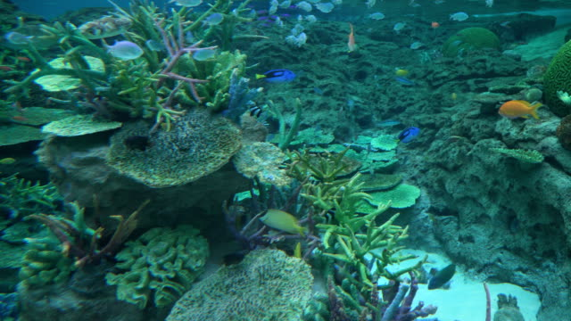 high angle view: sea life on shallow water - coral cnidarian stock videos & royalty-free footage