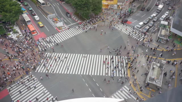 hd high angle view . shibuya crossing in tokyo , japan . - crossroad stock videos & royalty-free footage