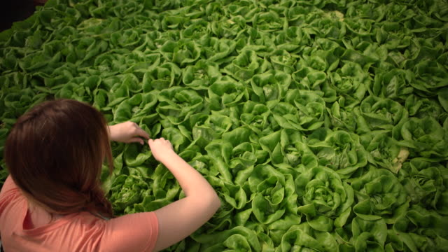 high angle view woman examining vegetables - hydroponics stock videos & royalty-free footage