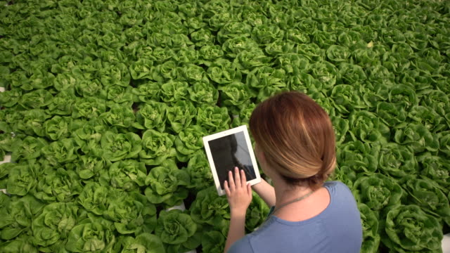 WS High angle view Woman working on a digital tablet on a hydroponic farm
