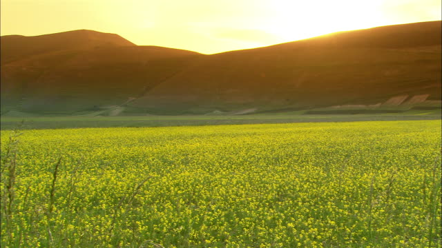 high angle wide shot field of oilseed rape in valley/ norcia - ウンブリア州点の映像素材/bロール