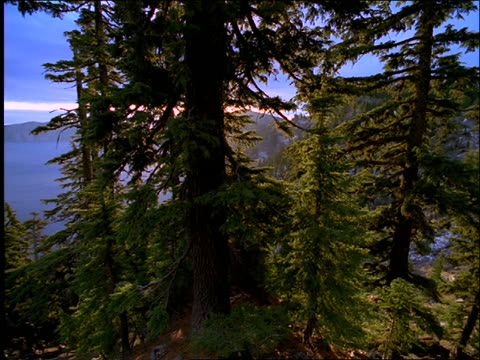 high angle wide shot pan from pine trees to wide shot of crater lake with island / oregon - crater lake oregon stock videos & royalty-free footage