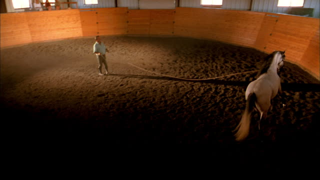 High angle wide shot horse running around circular barn w/trainer holding longe line