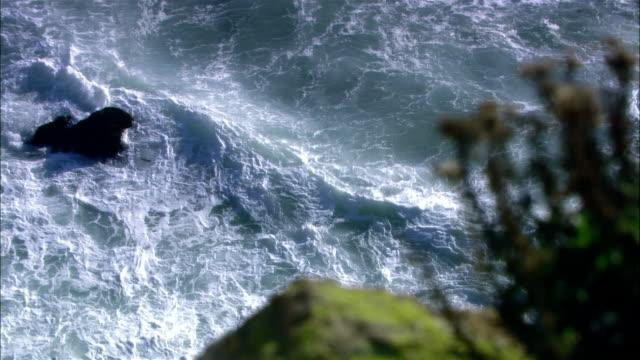 vidéos et rushes de high angle wide shot pan pelicans flying along rocky coast as tide comes in/ malibu, california - océan pacifique nord