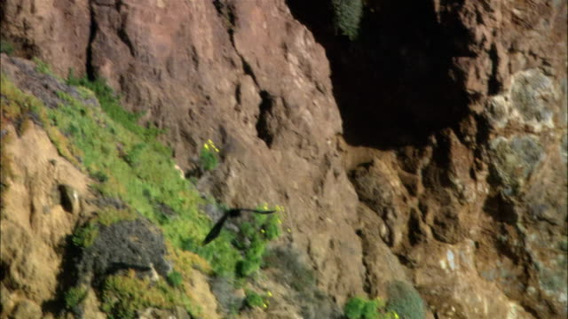 vídeos de stock, filmes e b-roll de high angle wide shot waves crashing on rocky beach/ malibu, california - pacífico norte