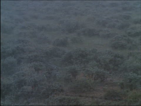 High angle wide shot zoom out pan snow falling on brush-covered landscape / Wyoming