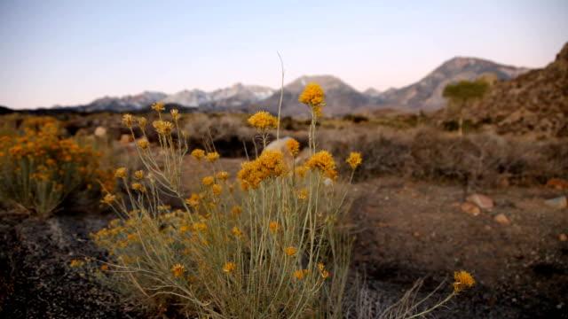 High Desert Morning