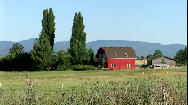 high evergreens encroach upon a red barn on a farm. - barn stock videos & royalty-free footage