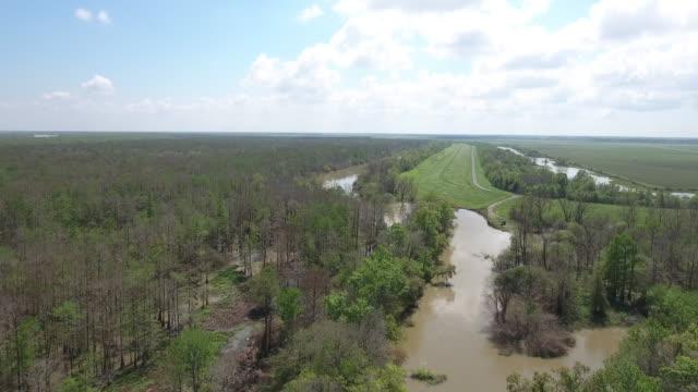 high flight over bayou river - drone aerial 4k everglades, swamp bayou with wildlife alligator nesting ibis, anhinga, cormorant, snowy egret, spoonbill, blue heron, eagle, hawk, cypress tree - drone aerial view - bayou lafourche stock-videos und b-roll-filmmaterial