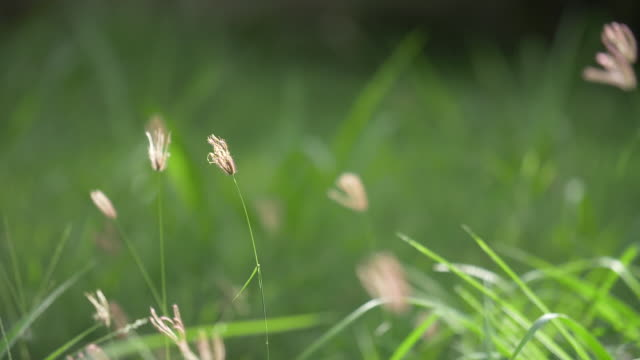 high grass on a summer day. - springtime stock videos & royalty-free footage