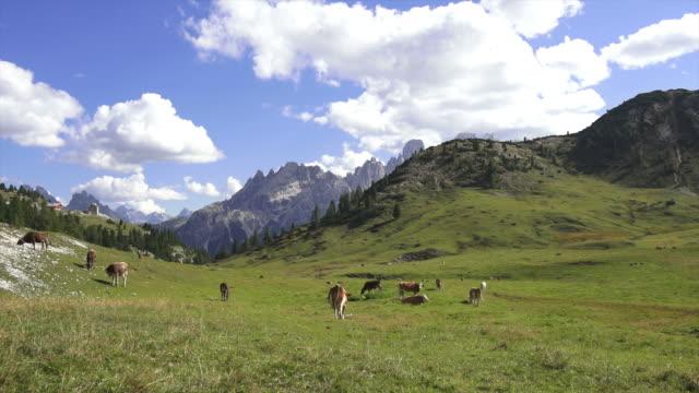 alta montagna pascolo nelle dolomiti - vacca video stock e b–roll