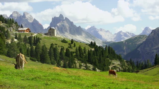 High Mountain Pasture In The Dolomites