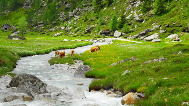 High Mountain weiden In den Alpen (UHD