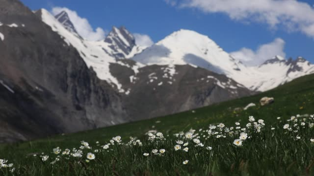 high mountain spring atmosphere in the galibier pass area on may 20 2020 in valloire france - flower head stock videos & royalty-free footage
