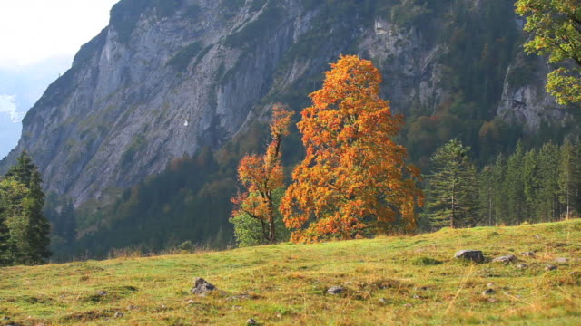 hd high mountain valley in fall (panning) - herbst stock videos & royalty-free footage