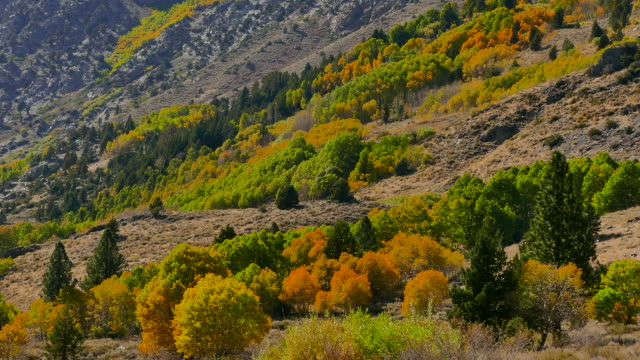 4k - high mountain valley with autumn colors - ash tree stock videos & royalty-free footage