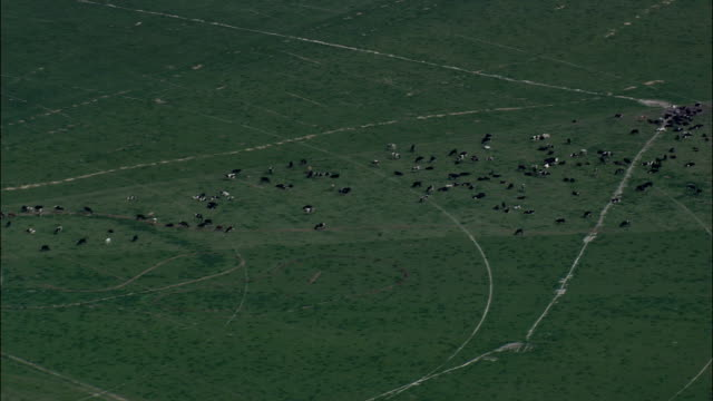 high over herd of cattle - Aerial View - Florida,  Dixie County,  United States