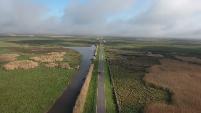 high over road near swamp - drone aerial 4k everglades, swamp bayou with wildlife alligator nesting ibis, anhinga, cormorant, snowy egret, spoonbill, blue heron, eagle, hawk, cypress tree 4k nature/wildlife/weather drone aerial video - bayou lafourche stock-videos und b-roll-filmmaterial