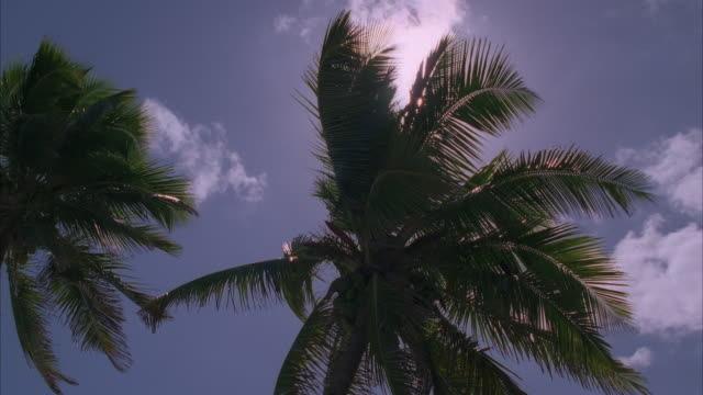 la high section of coconut palm tree against blue sky and sun - fächerpalme stock-videos und b-roll-filmmaterial