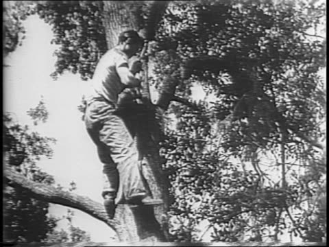 High shot of shipyard / welder in helmet works with blow torch / young man George Witters walks through woods uses vine to climb up to his treehouse...