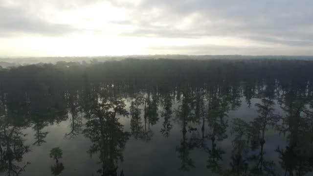 high side tracking over swamp bayou - drone aerial 4k everglades, swamp bayou with wildlife alligator nesting ibis, anhinga, cormorant, snowy egret, spoonbill, blue heron, eagle, hawk, cypress tree 4k nature/wildlife/weather - bayou lafourche stock-videos und b-roll-filmmaterial