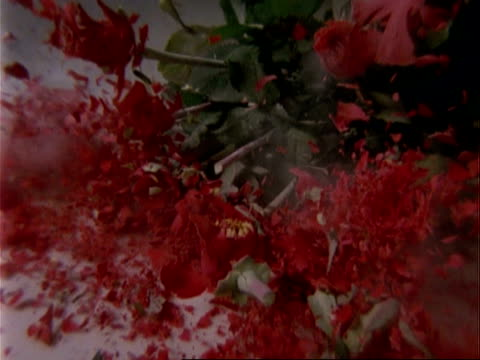 cu high speed bunch of red roses frozen in nitrogen smash onto surface - divorce stock videos and b-roll footage