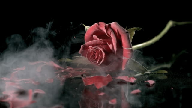 high speed deep frozen rose falling and shattering - frozen stock videos and b-roll footage