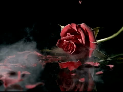 high speed deep frozen rose falling and shattering - 離婚点の映像素材/bロール