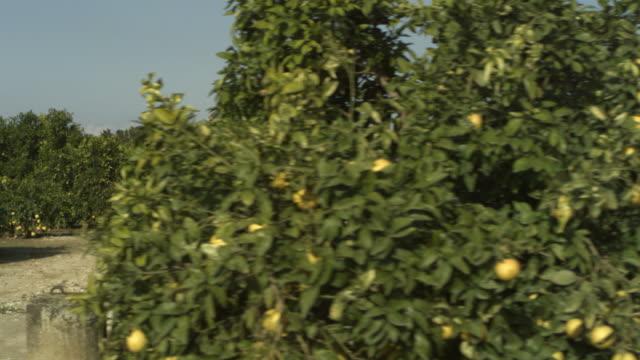 high speed driving past orange (citrus sinensis) grove entrance, spain - citrus fruit stock videos & royalty-free footage
