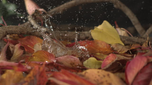 high speed green apple falls in to water and autumn leaves - 物理学点の映像素材/bロール