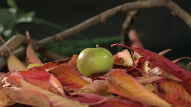 high speed green apple falls on autumn leaves, closer - campo gravitazionale video stock e b–roll