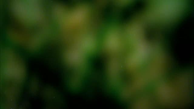 high speed monarch butterfly (danaus plexippus) in flight - tierflügel stock-videos und b-roll-filmmaterial