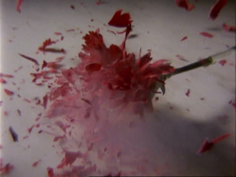 cu high speed single red carnation frozen in nitrogen smashes onto surface - carnation flower stock videos & royalty-free footage